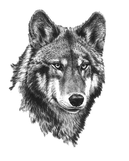 Black And White Wolf PNG Transparent Black And White Wolf.PNG Images.