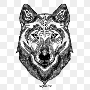 White Wolf Png, Vector, PSD, and Clipart With Transparent Background.