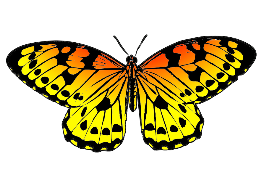 Free Yellow Butterfly Cliparts, Download Free Clip Art, Free.