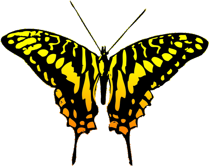 Black And Yellow Butterfly Clipart , Png Download.