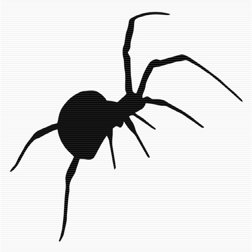 1000+ ideas about Redback Spider on Pinterest.