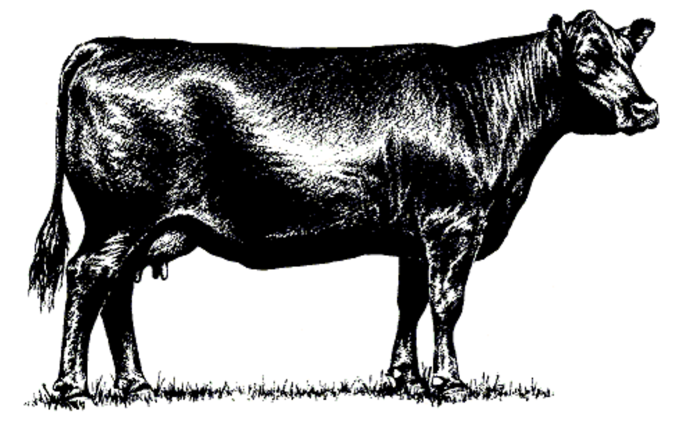 """Sullivan AuctioneersUpcoming Events » » Annual """"Bob Dwyer"""" Bred."""