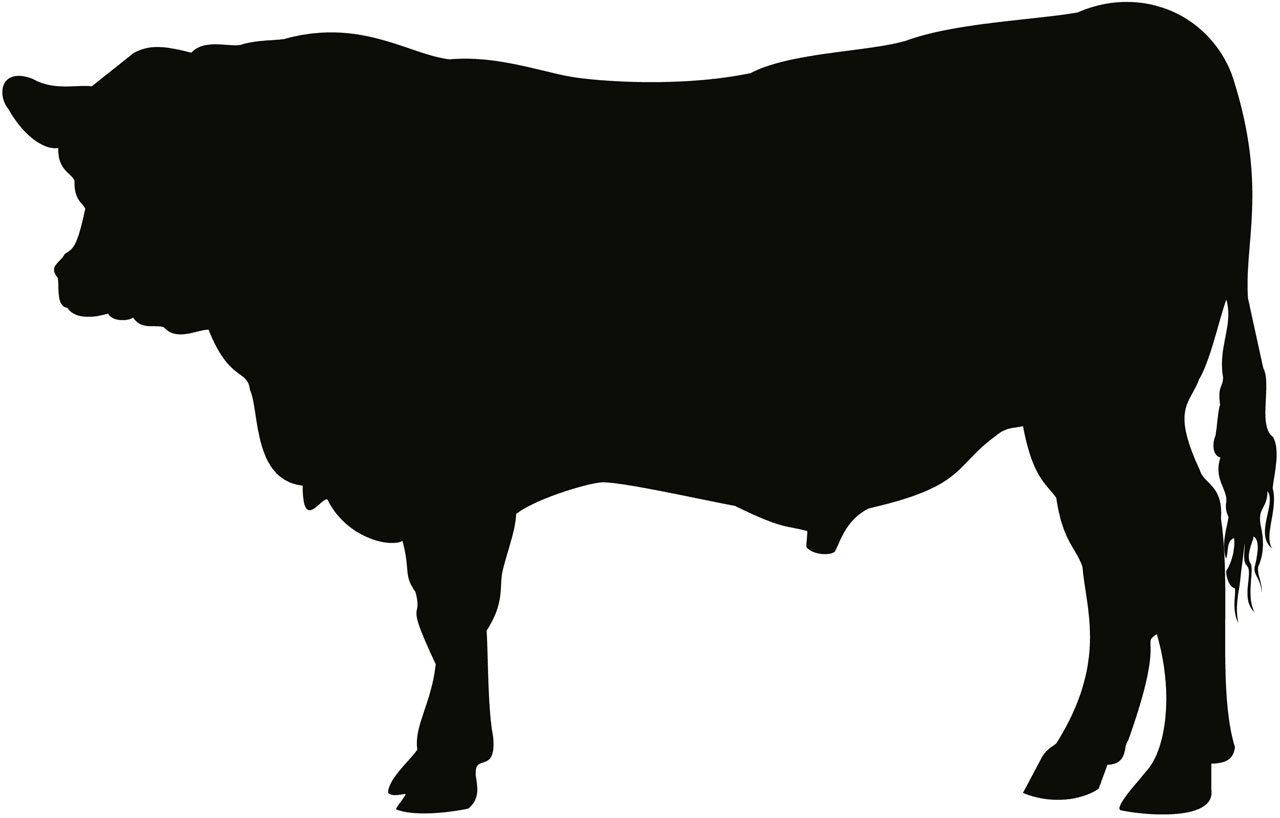 Image result for angus cow silhouette.