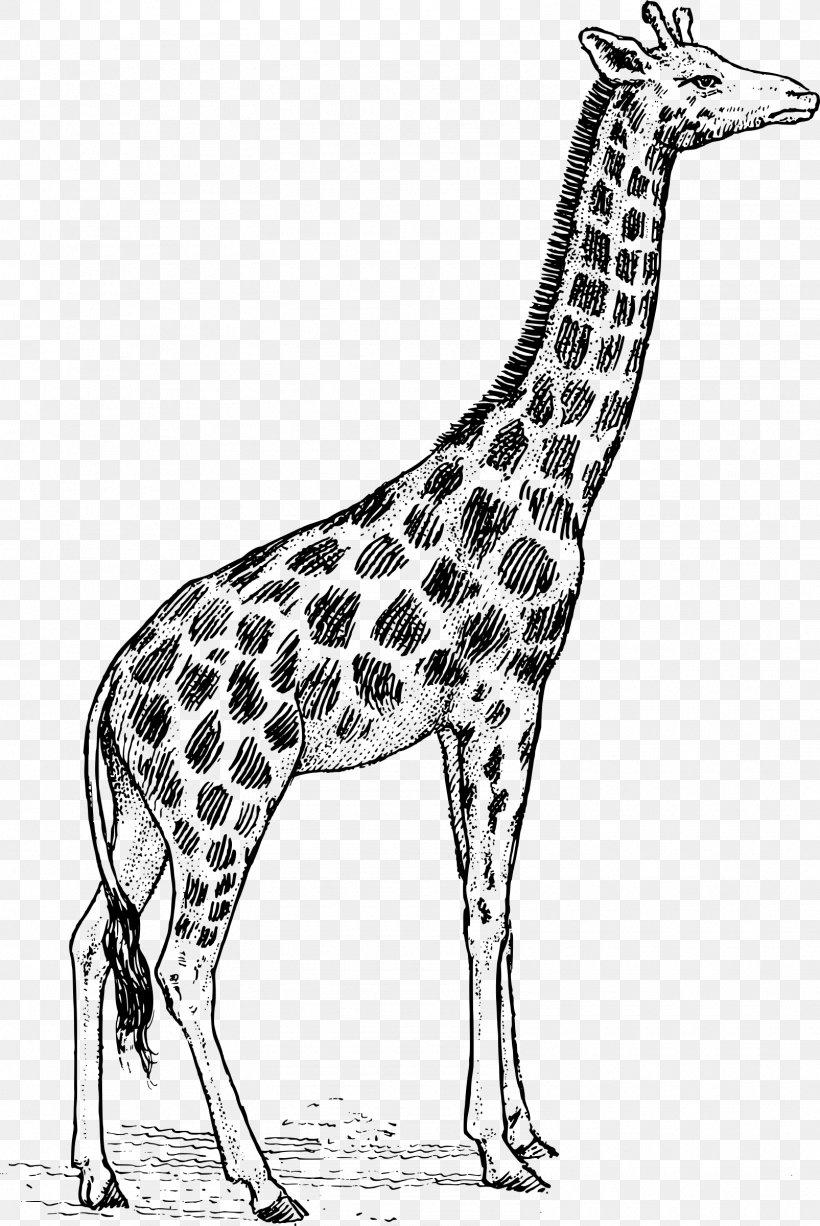 Baby Giraffes Drawing Art Clip Art, PNG, 1605x2400px.