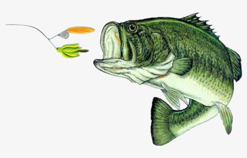 Free Bass Fish Clip Art with No Background.