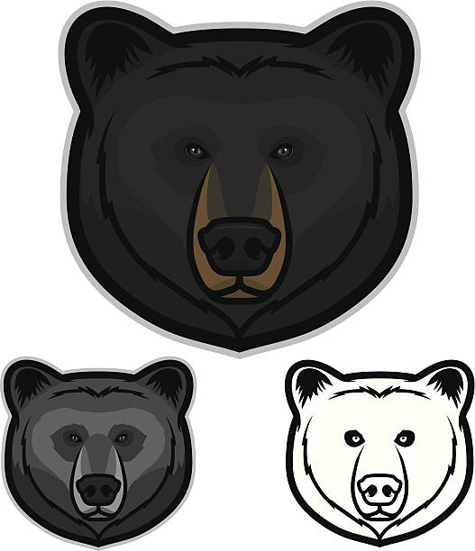 Best Black Bear Illustrations, Royalty.