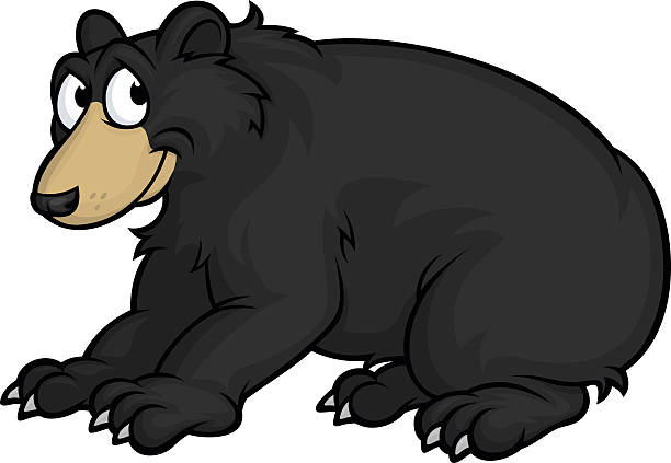 Best American Black Bear Illustrations, Royalty.