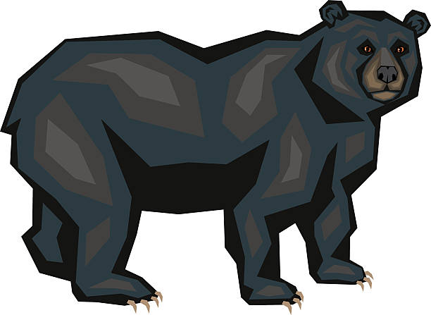 Best Black Bear Illustrations, Royalty.