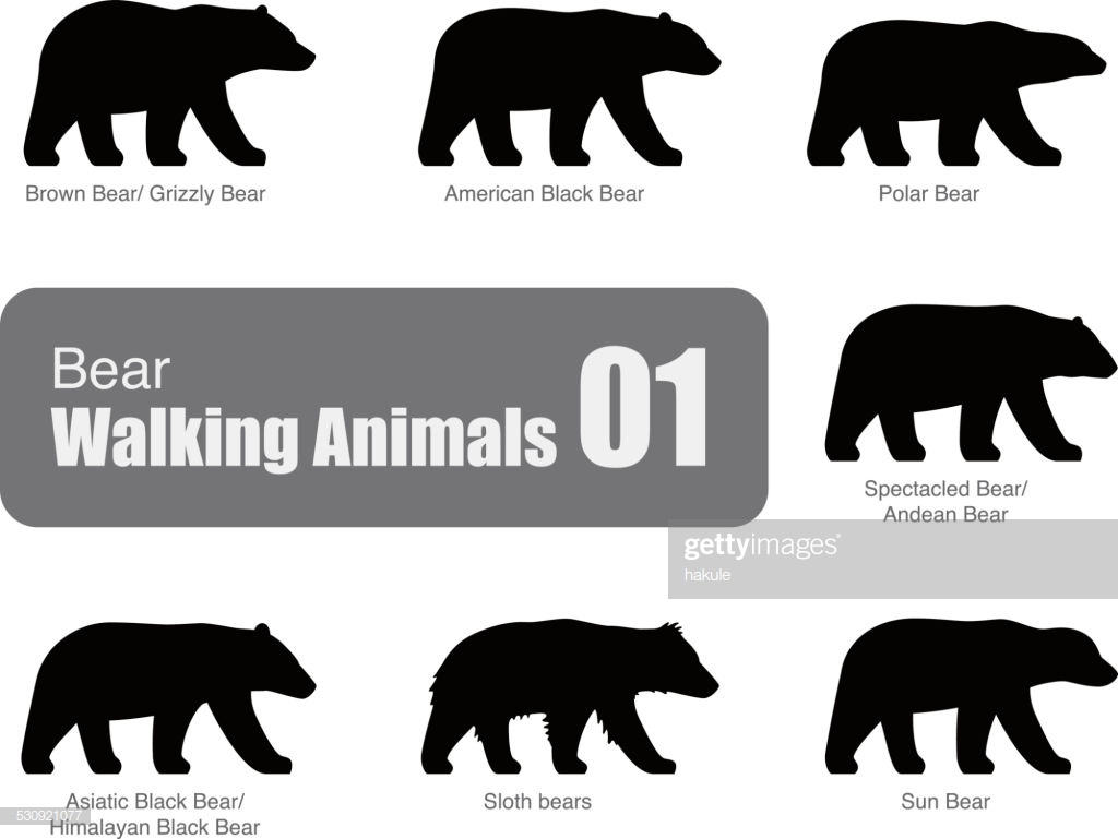 60 Top American Black Bear Stock Illustrations, Clip art, Cartoons.