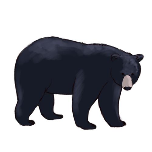 Standing Black Bear Drawing.