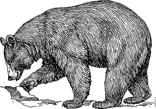 Black Bear clip art Free vector in Open office drawing svg ( .svg.
