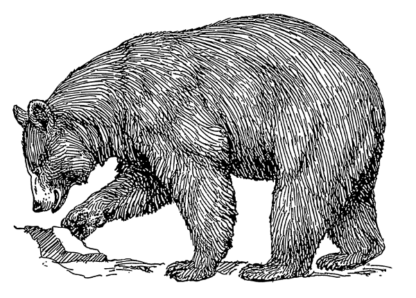 Free Black Bear Clipart, 1 page of Public Domain Clip Art.