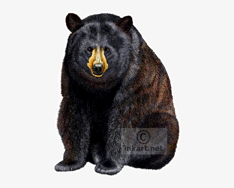 American Black Bear Decal.