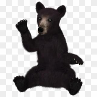 Free Black Bear PNG Images.