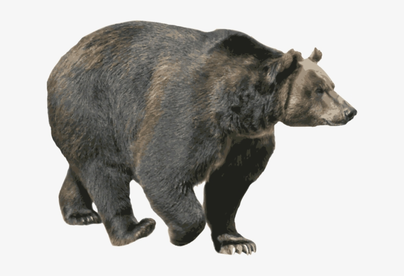 Bear Png Image Without Background.