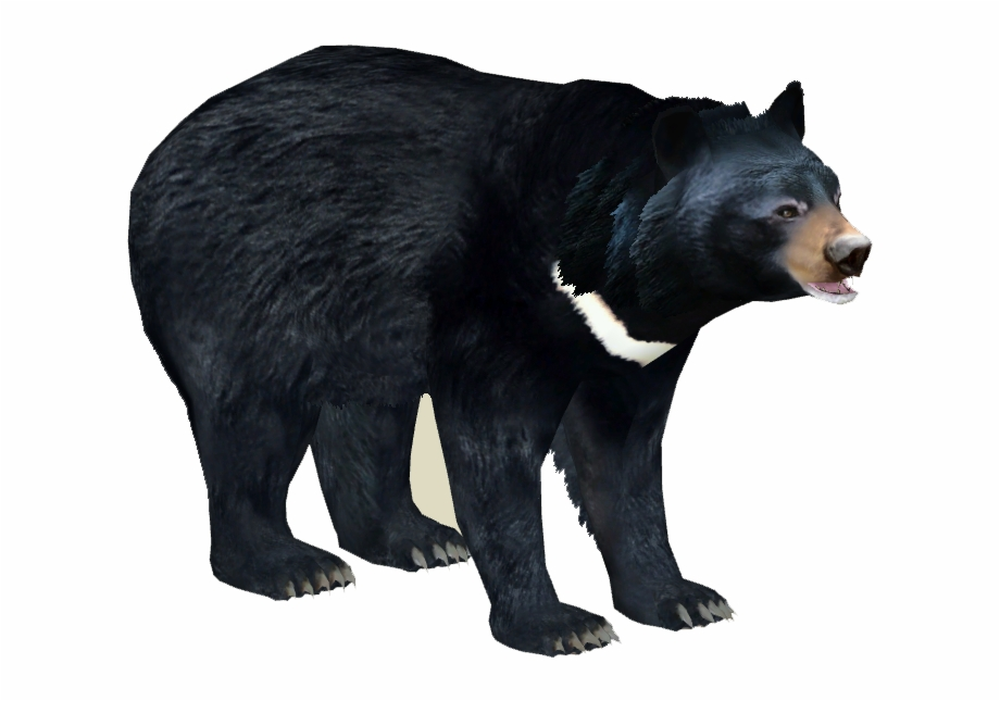 Asian Black Bear Png, Transparent Png Download For Free #2634344.