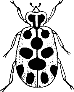 Beetle clipart black and white.