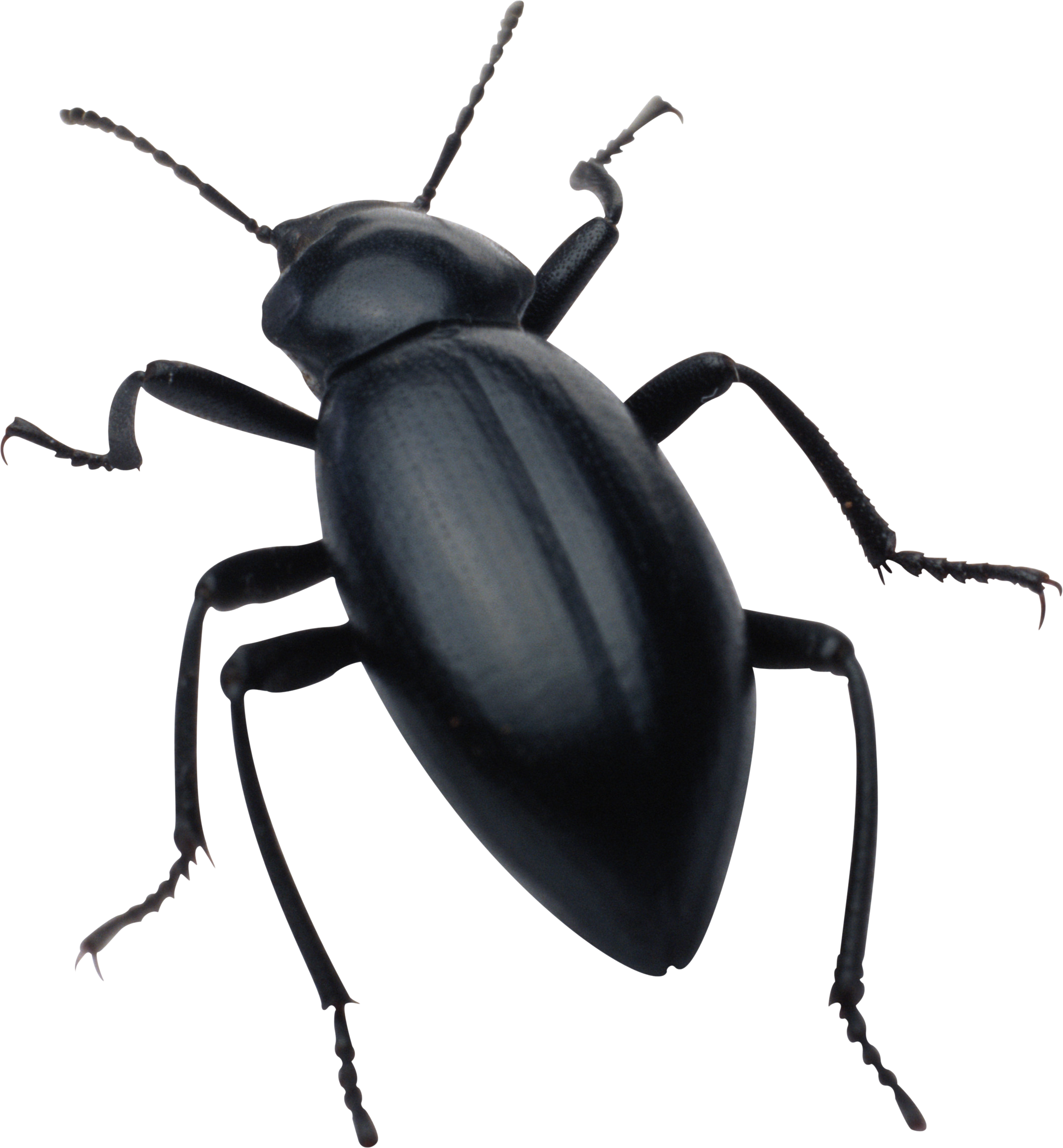 Bugs PNG images free pictures, bug PNG.