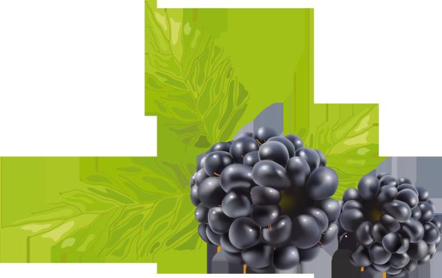 Clipart for blackberry.