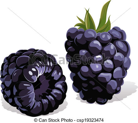 Blackberry Illustrations and Stock Art. 3,309 Blackberry.
