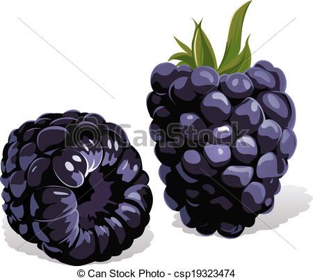 Blackberry Illustrations and Stock Art. 3,309 Blackberry.