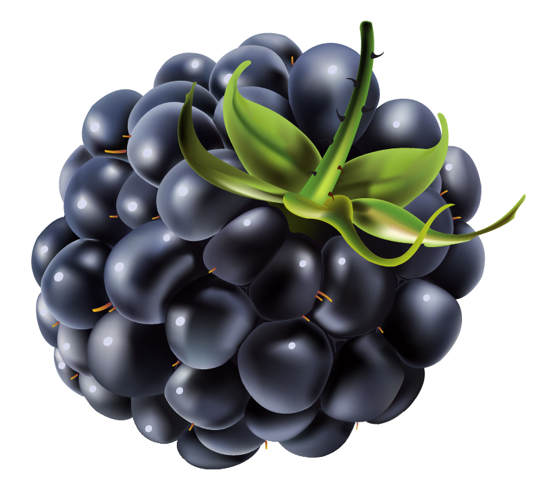 Blackberry PNG Vector Clipart Image.