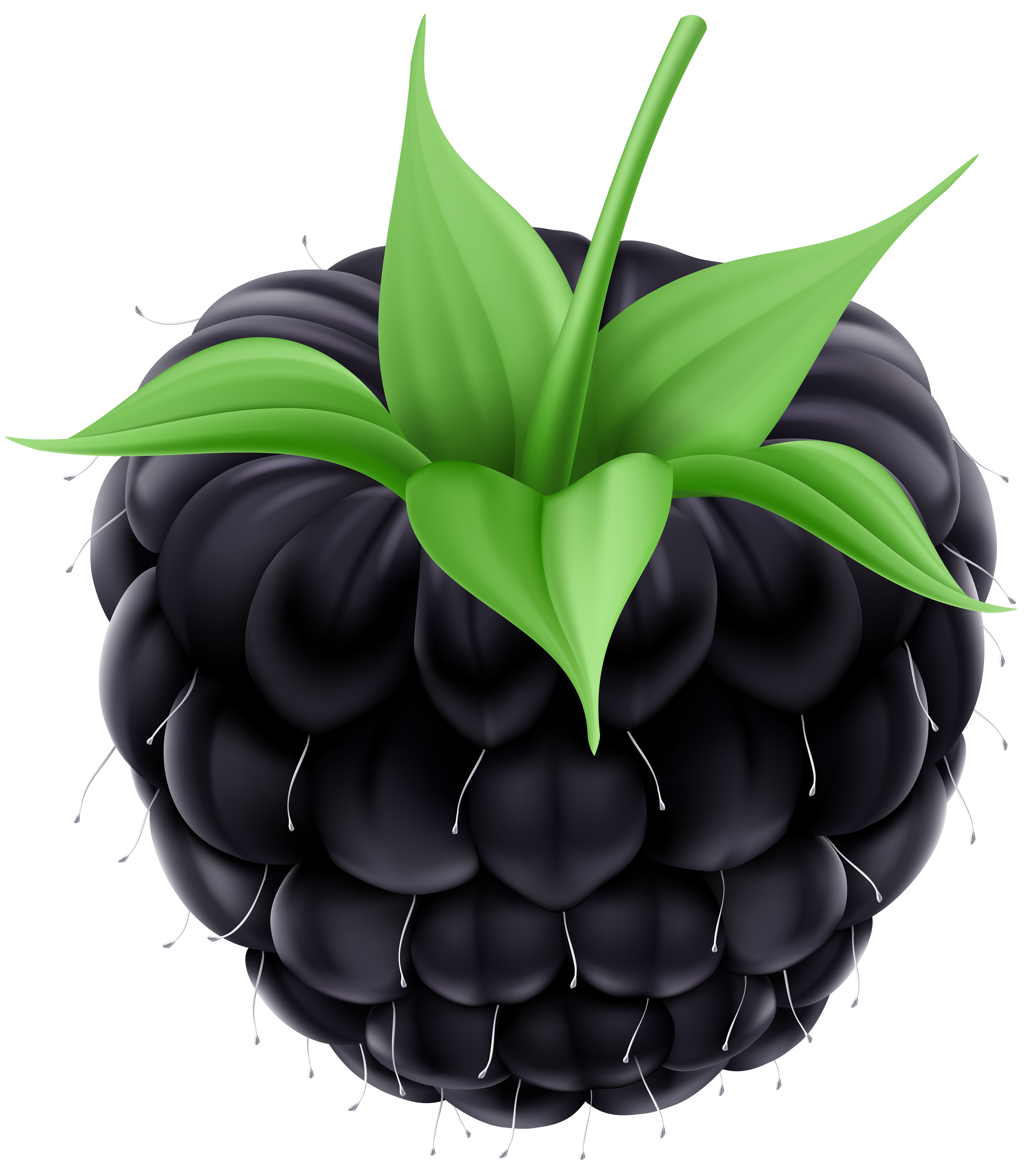 blackberry fruit clipart - photo #15