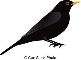 Blackbird Illustrations and Stock Art. 605 Blackbird illustration.
