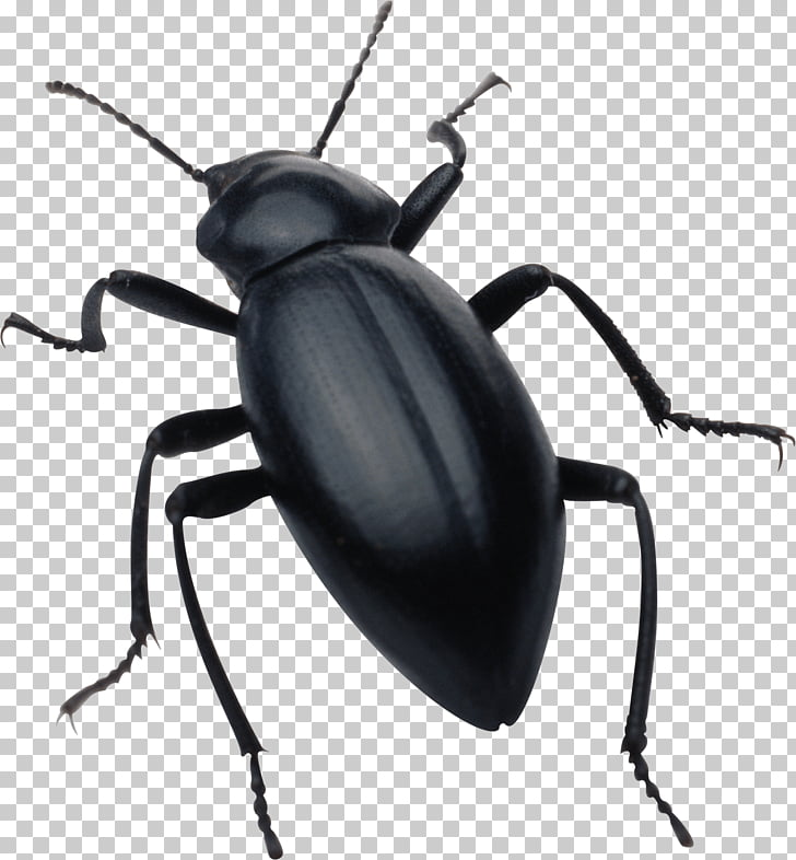 Insect , Black Bug PNG clipart.