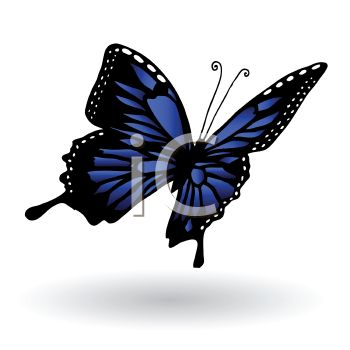 Realistic Blue and Black Butterfly.