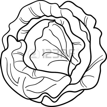 Cabbage clipart black and white.