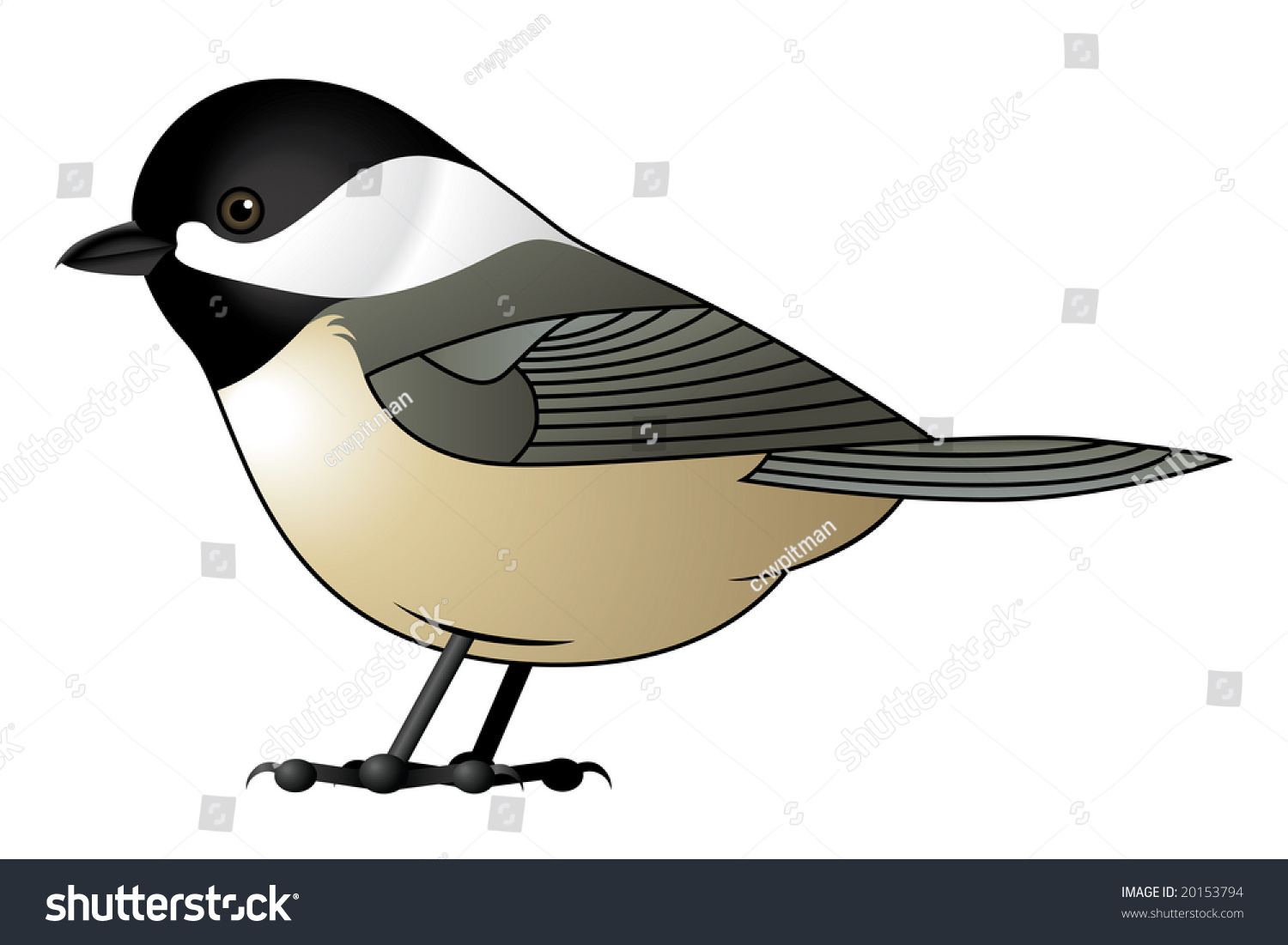 Black Capped Chickadee Vector Available Stock Illustration 20153794.