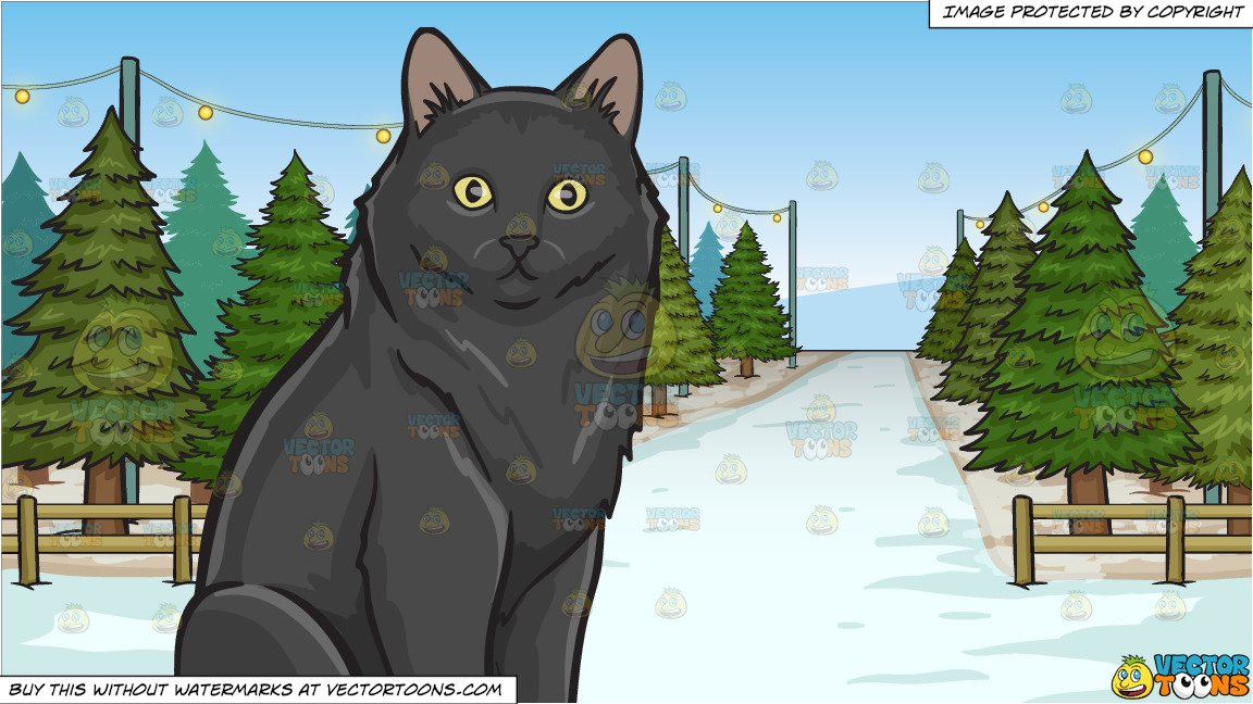 A Surprised Black Cat and Christmas Tree Lot Background.