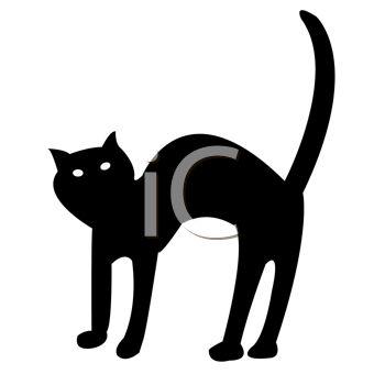 Black Cat on Halloween.