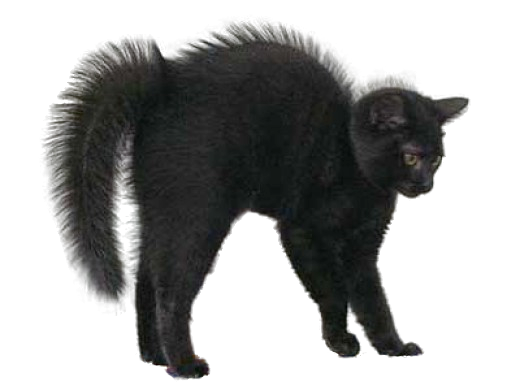 Download Black Cat PNG Image For Designing Projects.
