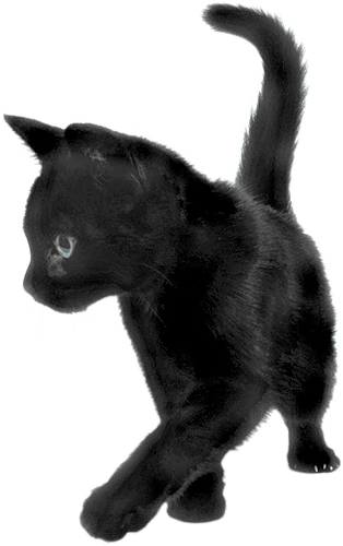 Black Cat Sideview transparent PNG.