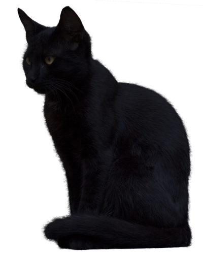 Transparent Black Cat PNG #30353.