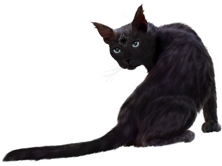 Download Black Cat PNG Clipart.