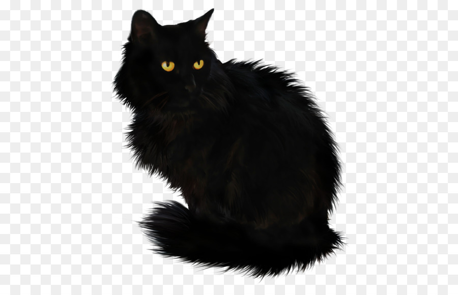 Black Cat Halloween png download.