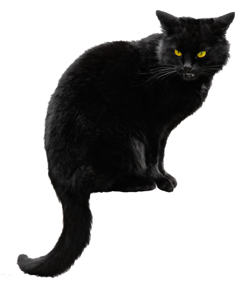 Black Cat Png HD Transparent.