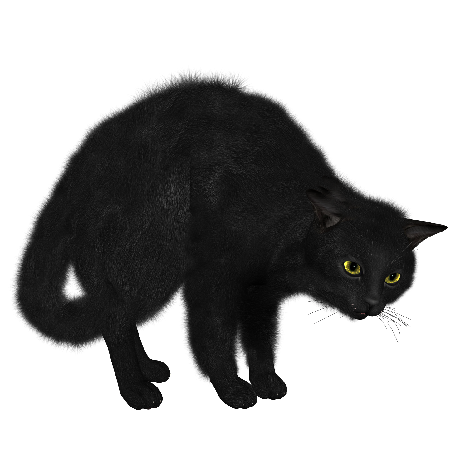 PNG Black Cat Picture #30351.