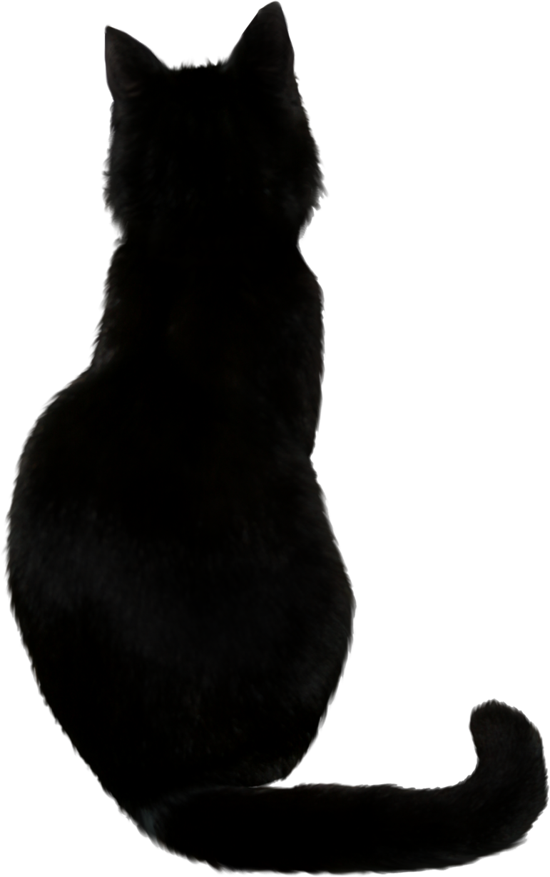 Cat PNG Images Transparent Free Download.