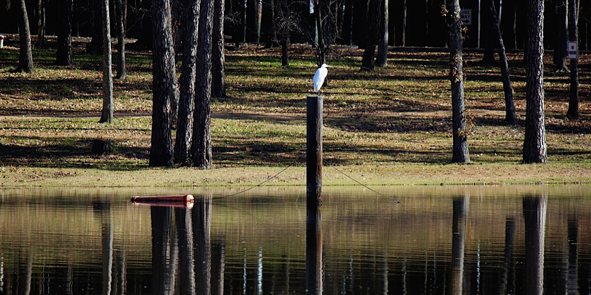 Cypress Black Bayou Recreation and Water Conservation.