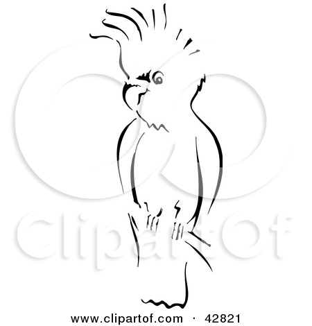 Clipart Illustration of a Black And White Sketch Of A Cockatoo.