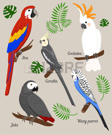 148 Black Cockatoo Stock Vector Illustration And Royalty Free.