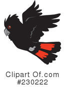 Clipart of Red Tailed Black Cockatoos #1.