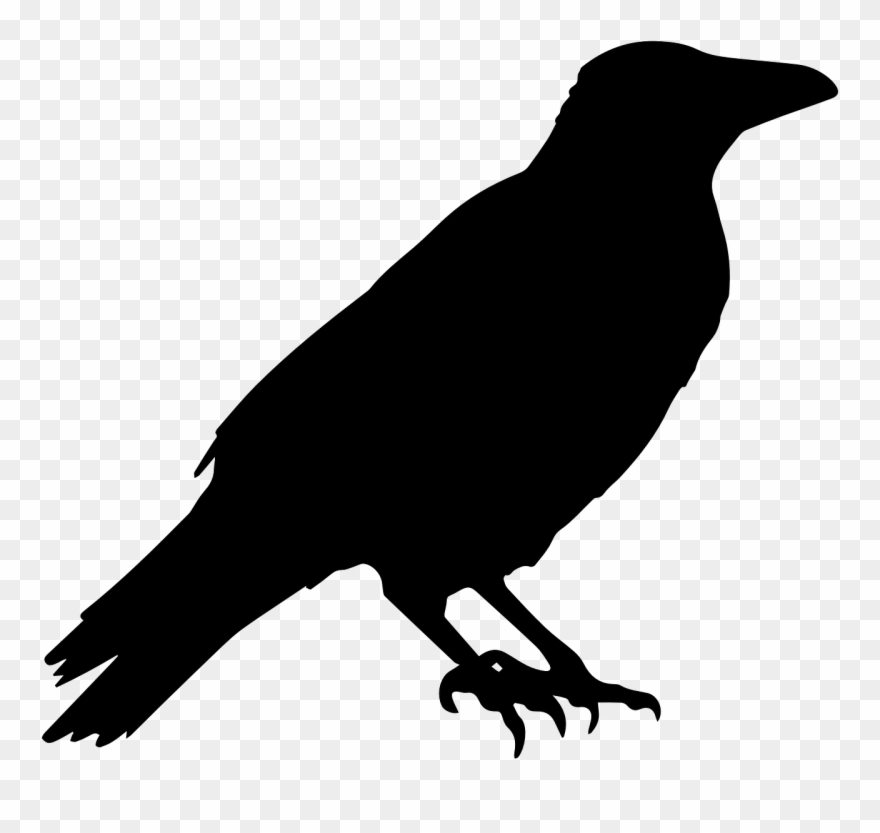 Crow Raven Animal.