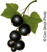 Black currants Clip Art Vector Graphics. 618 Black currants EPS.