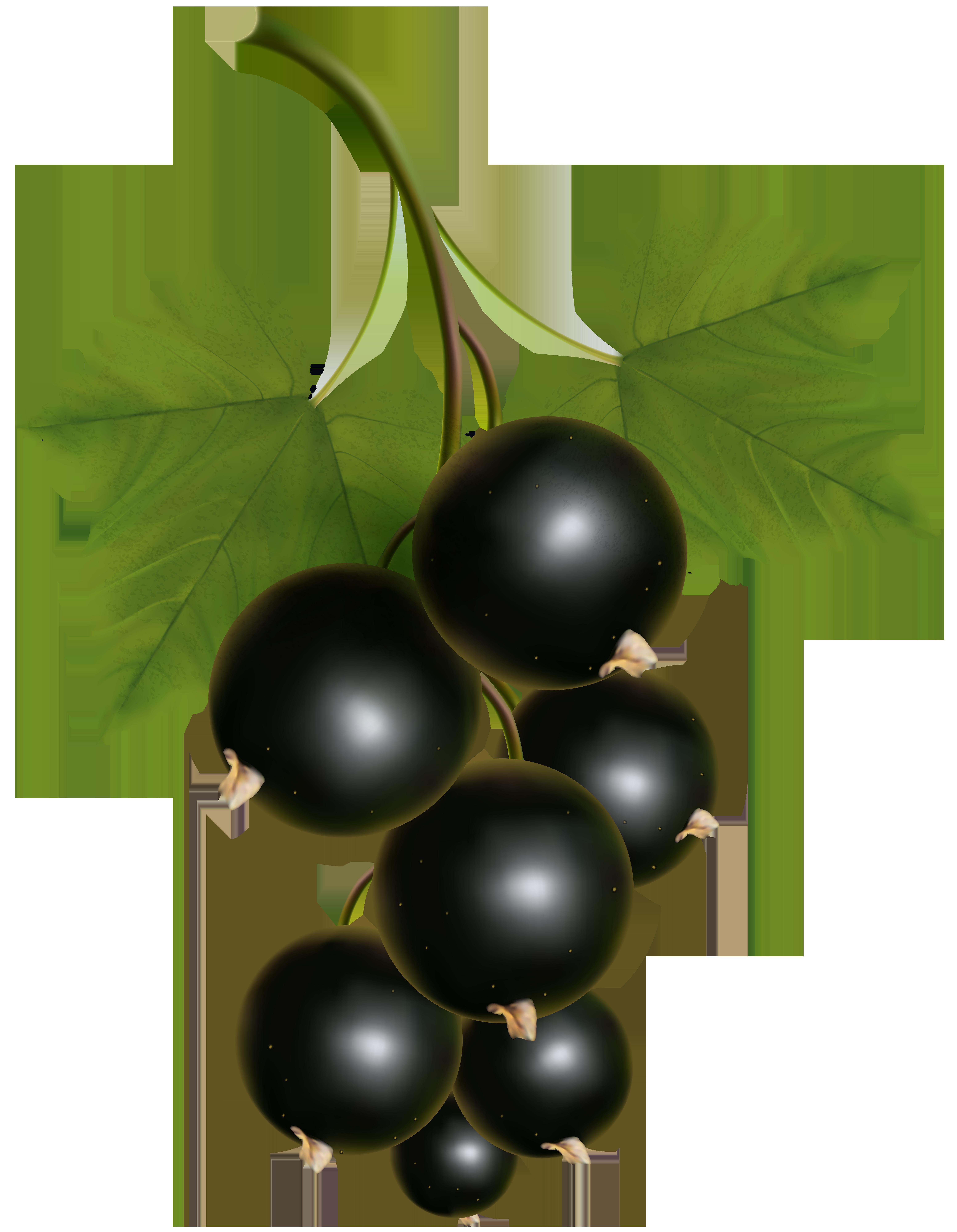 Black Currant Transparent PNG Clip Art Image.
