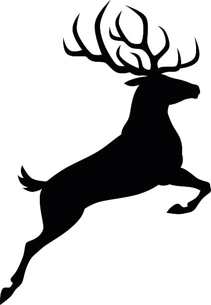 Best Stag Illustrations, Royalty.